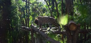 Belize Zoo & Cave Tubing