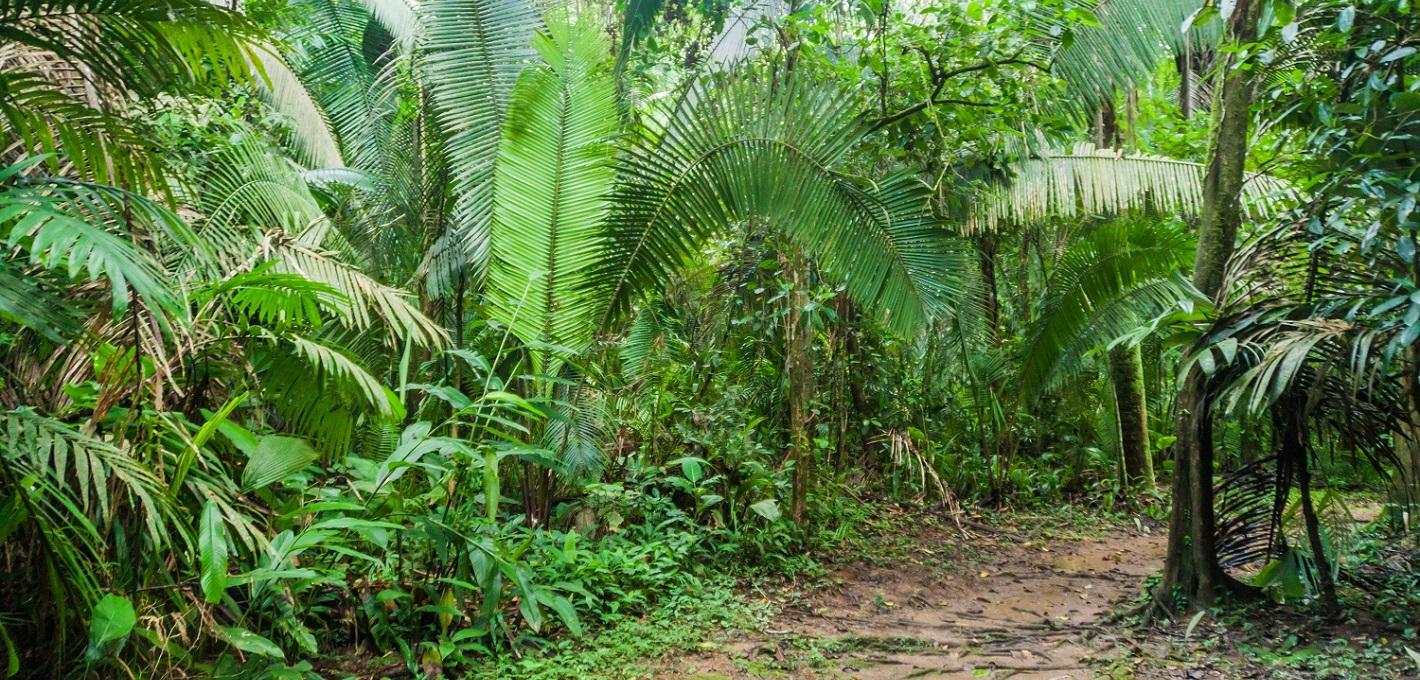 Cockscomb Basin & Jaguar Reserve